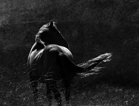 Horses and the Heart